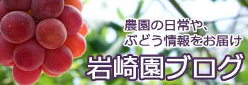 農園の日常やぶどう情報をお届け。岩崎園ブログ。