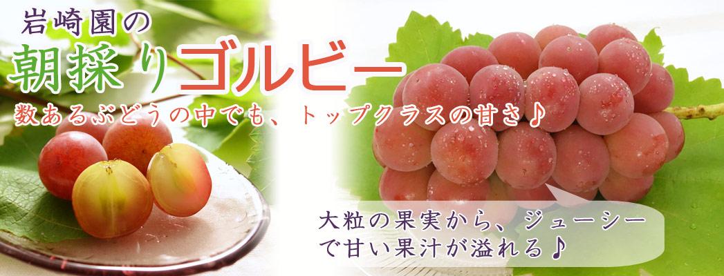 数あるぶどうの中でも、トップクラスの甘さ♪大粒の果実から、ジューシーで甘い果汁があふれる♪岩崎園の朝採りゴルビー