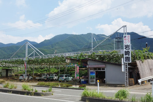 道路から見える岩崎園の風景