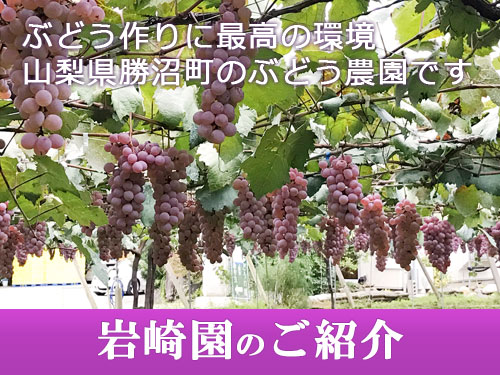 ぶどう作りに最高の環境、山梨県勝沼町のぶどう農園です。岩崎園のご紹介