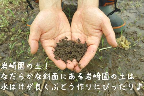 岩崎園の水はけの良い土壌
